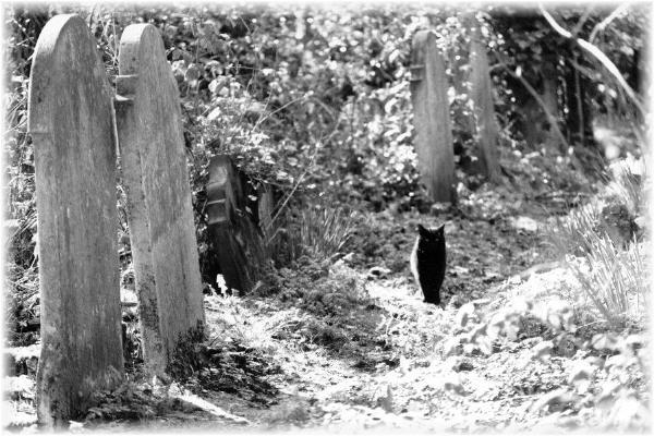 blackcats.jpg